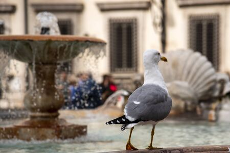 Seagull resting on a fountain in the historic center of Rome, Italy