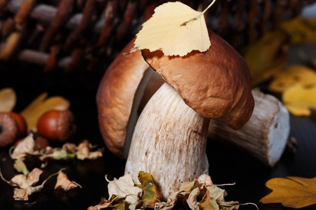 provisions: Ceps, basket, acorn and autumn leaves