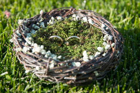 moss: Pair of wedding rings laying in nest. Wedding decoration. Symbol of family, togetherness and love