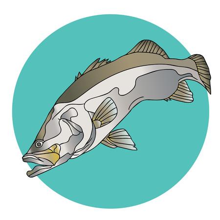 logo poisson: Barramundi poisson Logo