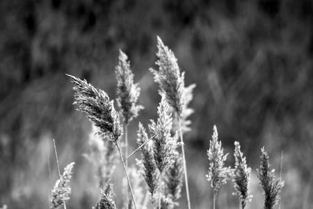 In the wind Reklamní fotografie
