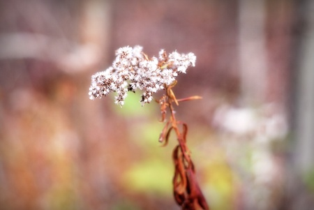Fuzzy Autumn Plant