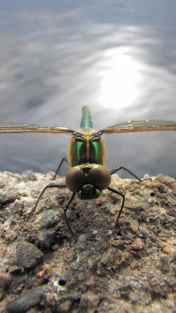droopy: dragonfly