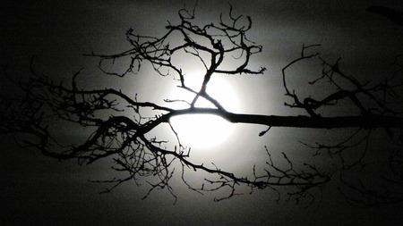 milkyway: branch