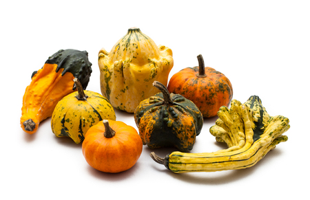 Colorful pumpkin and squash on white background