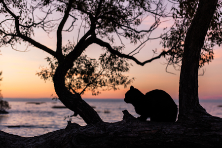 Cat on tree with Violet sunset on Finland gulf Фото со стока