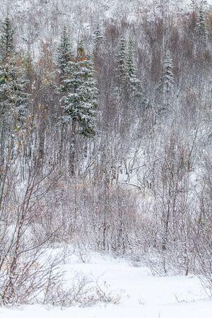 Flocons de neige sur les feuilles, début de l'hiver, première neige