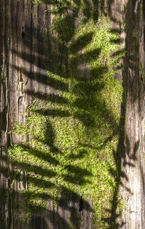 Moss on tree trunk Reklamní fotografie