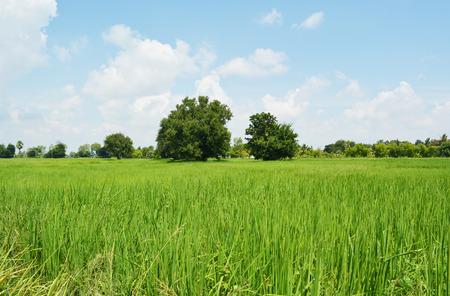 tree in field: grass field and sky