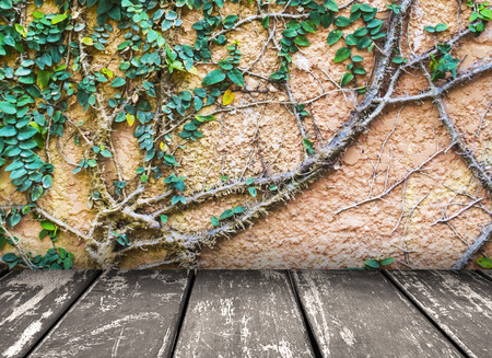creeps: vine climbing on the wall background with gray wood floor