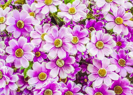 patrones de flores: Fondo abstracto de flores de color rosado