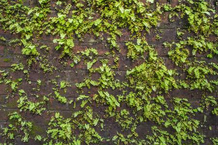 patroon van plant op oude muur