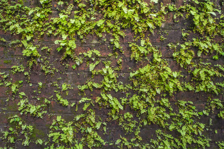 sodden: pattern of plant on old wall Stock Photo