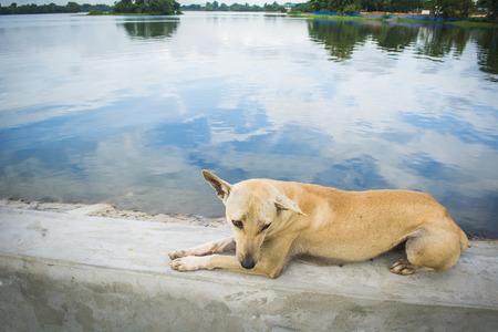De hond zat aan het meer