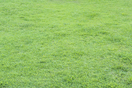 groen grasveld ter plaatse Stockfoto