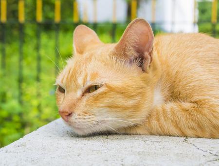 kat zitten op outdoor