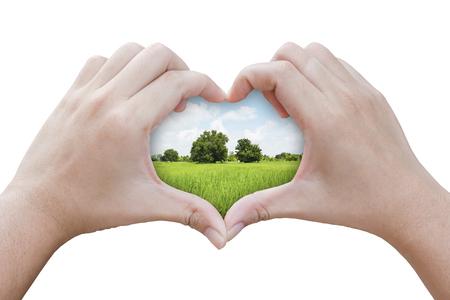 handen in de vorm van een hart met gras veld achtergrond Stockfoto