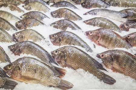 Many tilapia are placed on ice, shot from supermarket Stockfoto - 111019262