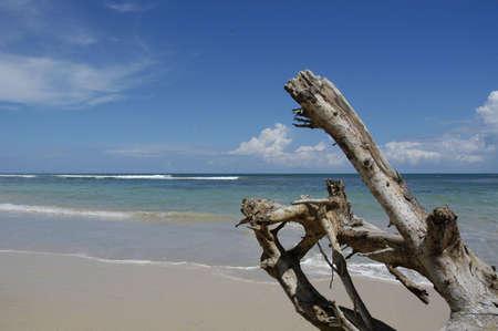 Drift Wood on Beach Stock Photo
