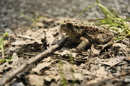 warts: Toad-aly Toad