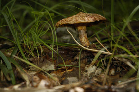 Mushroom Stock Photo - 7896400