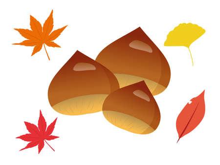 Autumn Chestnut Illustrations Ilustração