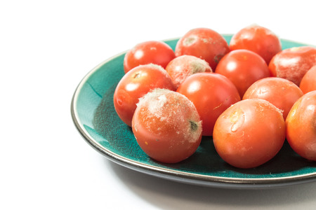 spoilage: Moldy tomatoes on a plate closeup isolated on white