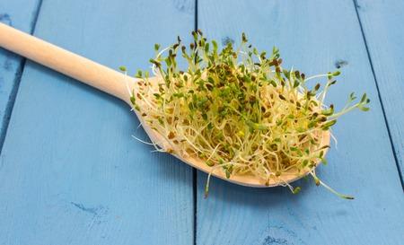 De gezonde voeding. Close-up van alfalfa spruiten. Stockfoto