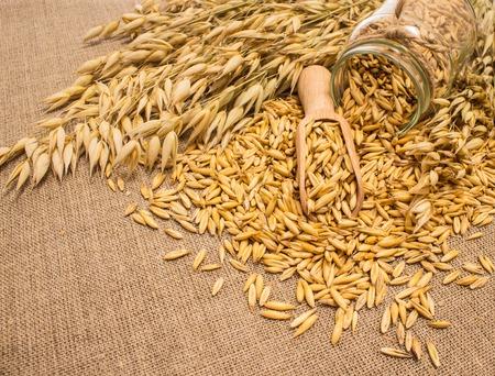 avena: dieta suplementos de granos de avena sobre lienzo primer plano