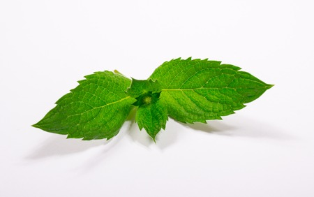 Closeup of fresh mint leaves isolated on white
