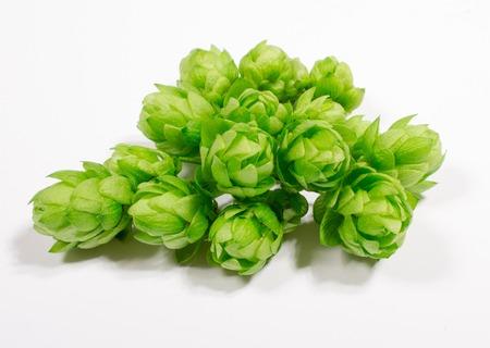 Fresh hops isolated on white background, closeup.