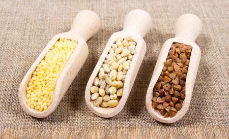 pearl barley: Pearl barley, buckwheat and millet groats on canvas.