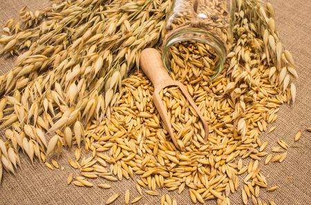 diet supplements oat grain on canvas closeup