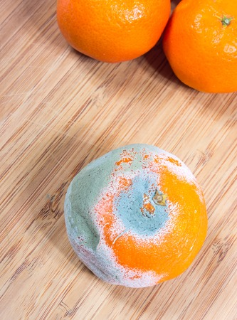 Closeup of a moldy mandarin on a wooden background.