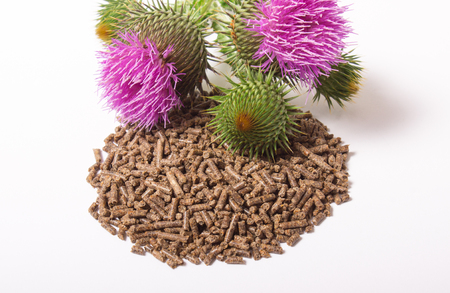 granular: Dietary supplement - granular and fresh thistle with flowers (Silybum marianum, Scotch Thistle, Marian thistle ) isolated on white background.
