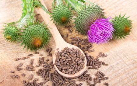 granular: Dietary supplement - granular and fresh thistle with flowers (Silybum marianum, Scotch Thistle, Marian thistle ) on wooden table.