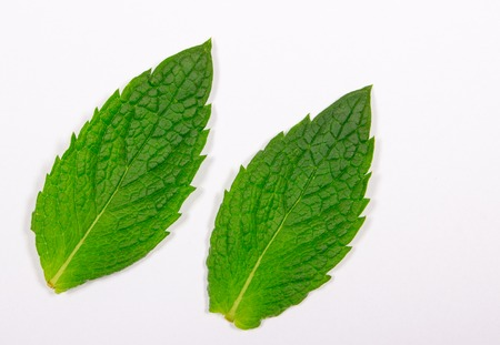 frescura: Closeup of fresh mint leaves isolated on white