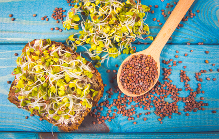 Radish sprouts as an ingredient of a healthy diet. Blue wooden background.