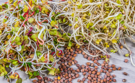 Radish and broccoli sprouts as an ingredient of a healthy diet. A bright wooden background.