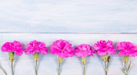 Background with live carnation flowers. A place for an inscription. Stock Photo