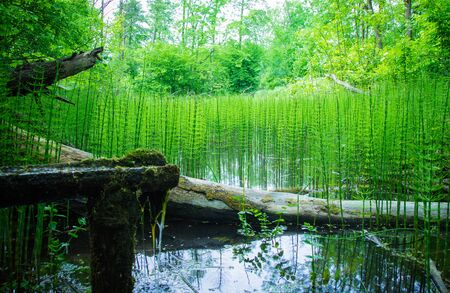 Summer, forest background. A brook in the middle of the forest.