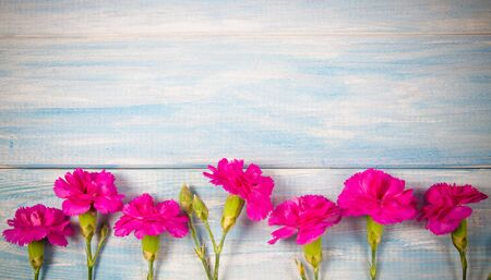 Background with live carnation flowers. A place for an inscription. 写真素材