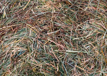 Straw texture background. Abstract background made from dry grass