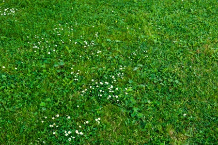 green grass and white flowers Stock Photo