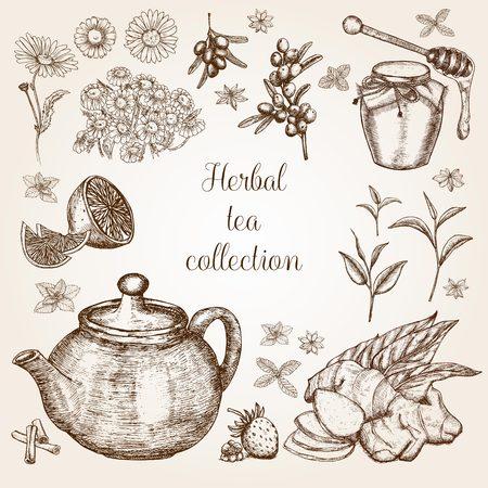 Handgetekende kruidentheecollectie in vintage stijl Stock Illustratie