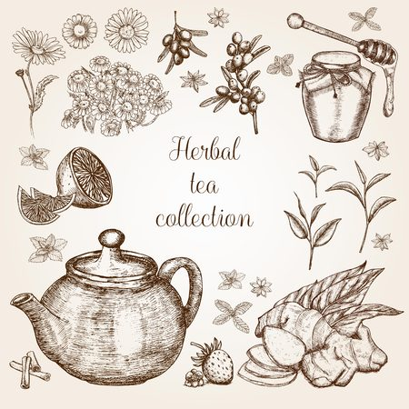 Hand-drawn Herbal Tea Collection in vintage style