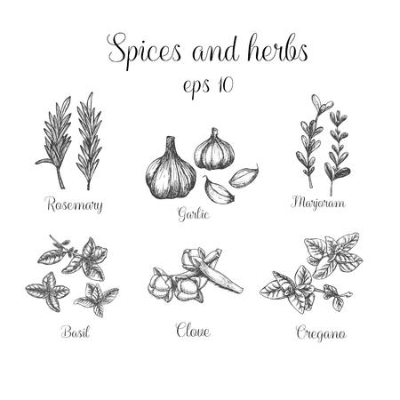 Specerijen en kruiden instellen. illustratie