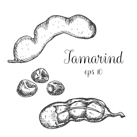 Tamarind. Hand drawn graphic illustration.