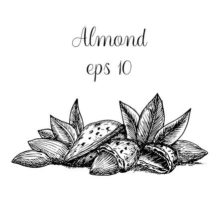 Hand drawn almond