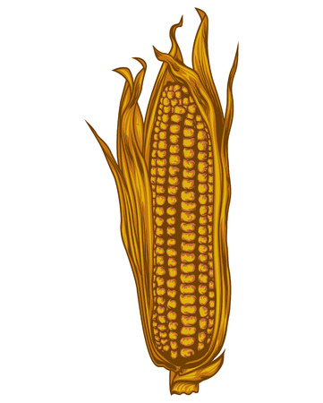 corncob: Golden corncob Illustration